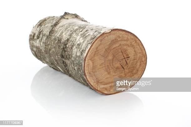 birch log on a white background - log stock pictures, royalty-free photos & images