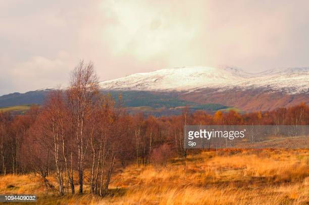 """birch tree in the scottish highlands in a winter landscape in scotland - """"sjoerd van der wal"""" or """"sjo"""" stock pictures, royalty-free photos & images"""