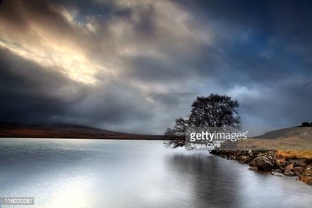 Birch tree on banks of Scottish Loch