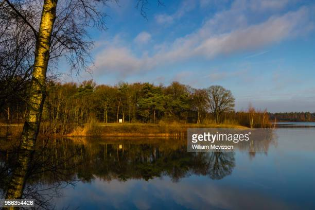 birch tree view - william mevissen stock pictures, royalty-free photos & images