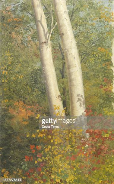 Birch Trees in Autumn, Frederic Edwin Church, American, 1826–1900, Brush and oil paint on paperboard, The trunks of two birch trees stand amid autumn...