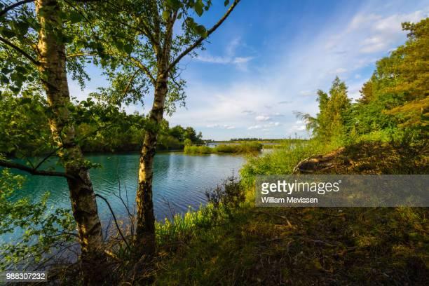 Birches View