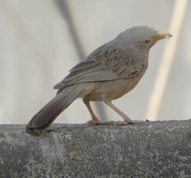 Bird & The Prey