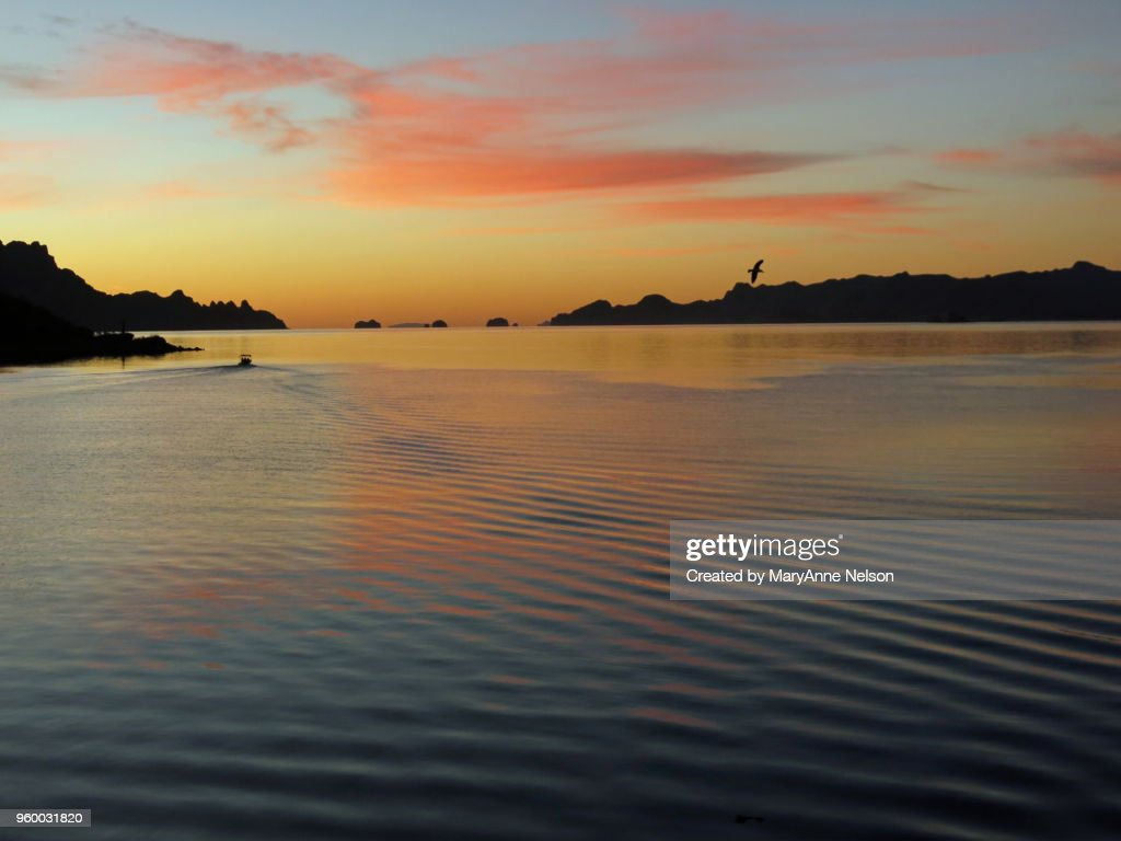 Bird and Boat Wake at Colorful Sunrise Waters : Stock-Foto