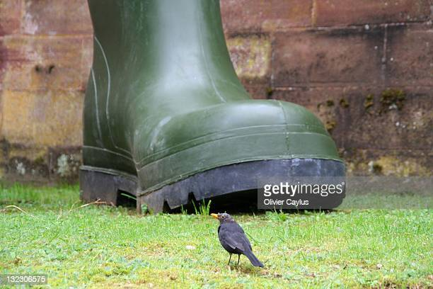 Bird and giant boot