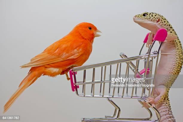 Bird and lizard speak in a shopping cart inside a supermarket
