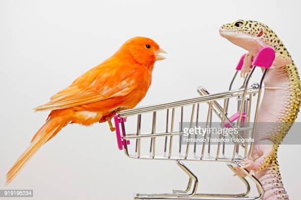Bird and lizard speak in a shopping cart inside a supermarket