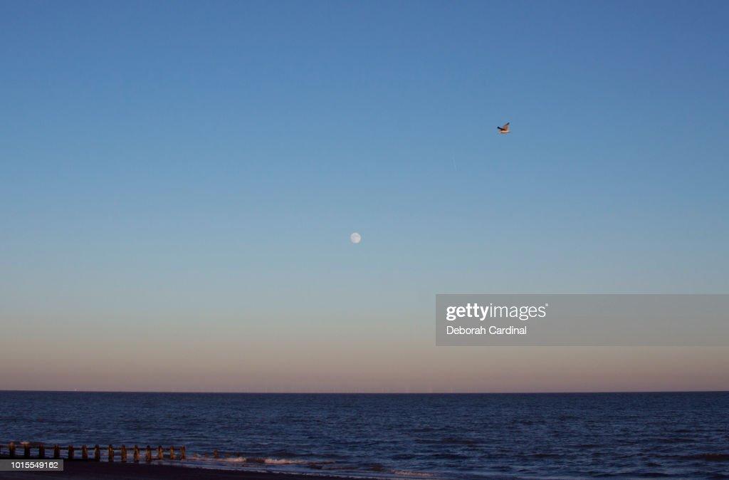 Bird and Moon over Littlehampton : Stock Photo