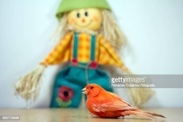 bird and scarecrow (horizontal version) - scarecrow faces stock photos and pictures