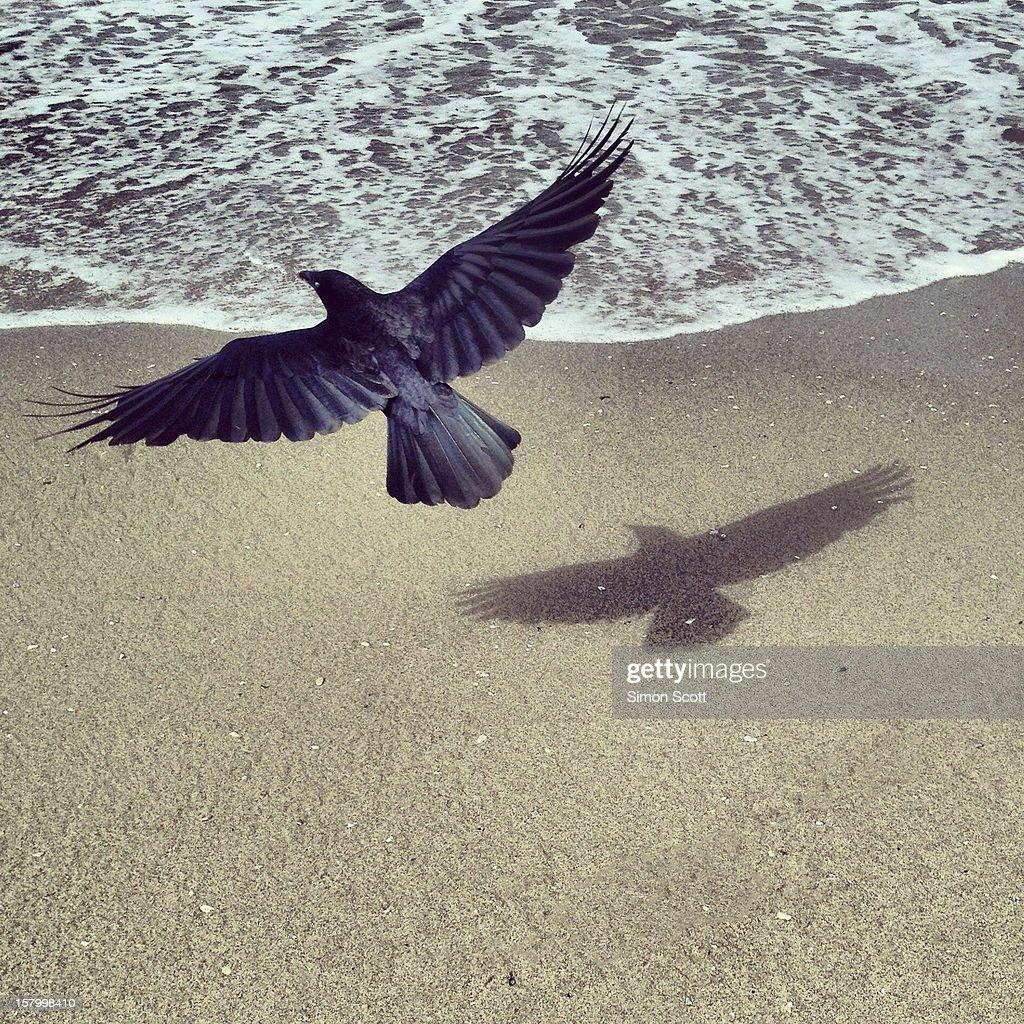 Bird and Shadow : Stock Photo