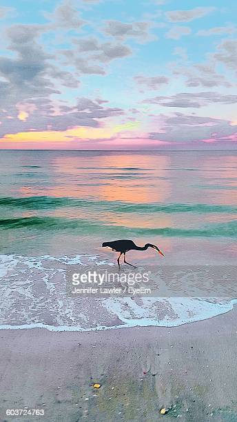 Bird At Beach Against Sky During Sunset