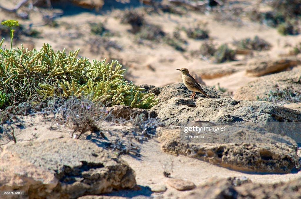 Bird at the beach : Foto stock