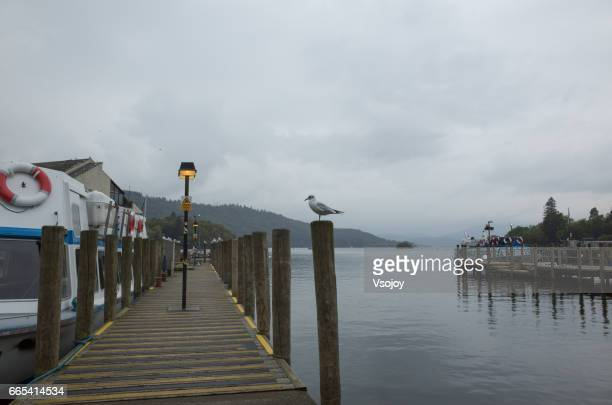 A bird at the pier at Bowness Bay, Windermere, Lake District