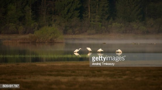 79 Municipality Of Cerknica Photos And Premium High Res Pictures Getty Images