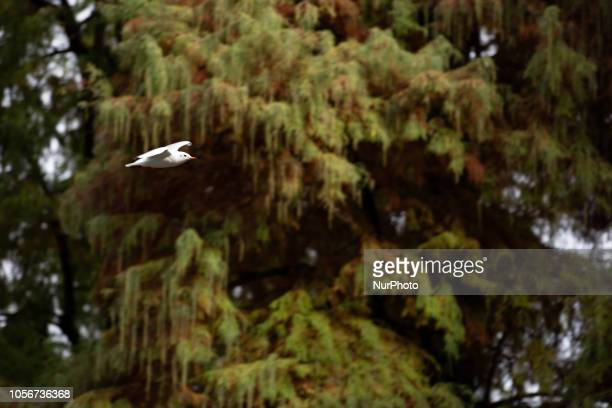 A bird bird flying is seen in the capital of Piedmont in Northern Italy