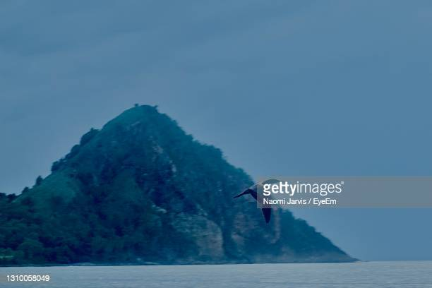 bird by piton in cap estate st lucia - naomi jarvis stock pictures, royalty-free photos & images