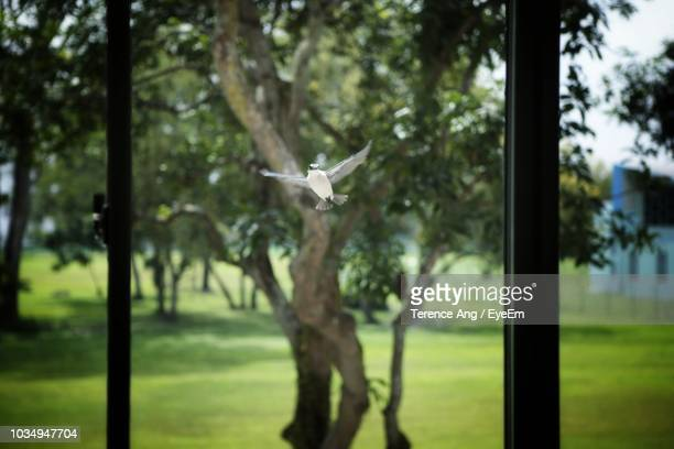 bird by trees in park seen through window - photographed through window stock pictures, royalty-free photos & images