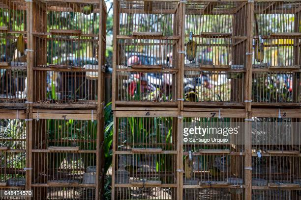 bird cages at bird market in yogyakarta - trafficking stock pictures, royalty-free photos & images