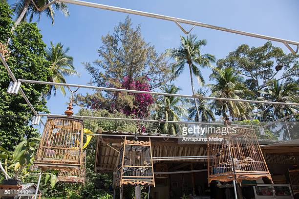 bird cages on koh tao island, thailand - golf von thailand stock-fotos und bilder