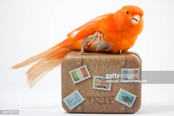 Bird carrying a suitcase to go on vacation