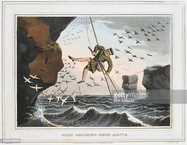 'Bird Catching from Above' Shetland Islands 1813 Catchers were lowered down on a rope Birds and eggs were a great economic resource for the Shetland...
