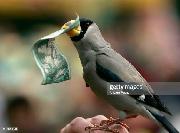 Bird collects a banknote from a Chinese reveller during a performance by an animal trainer at a fair on the eve of Chinese New Year February 8, 2005...