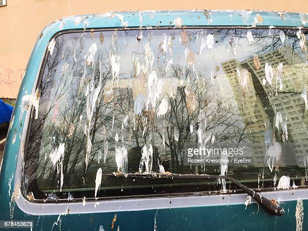 bird droppings on car - fezes imagens e fotografias de stock
