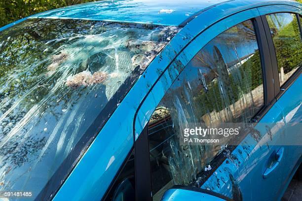 bird droppings on car windows - scheisse stock-fotos und bilder