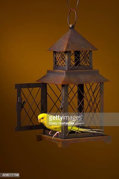 Bird Escaping Cage