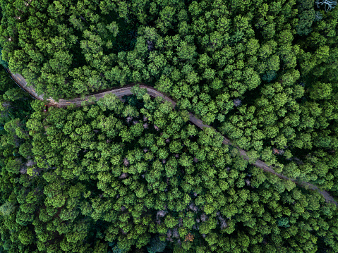 Bird eye view from Drone of pines forest in Chiang Rai Province, Thailand - gettyimageskorea