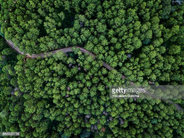 Bird eye view from Drone of pines forest in Chiang Rai Province, Thailand