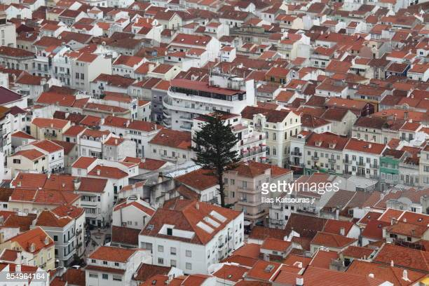 Bird eye view of a single tree in the dense Nazaré town in Portugal