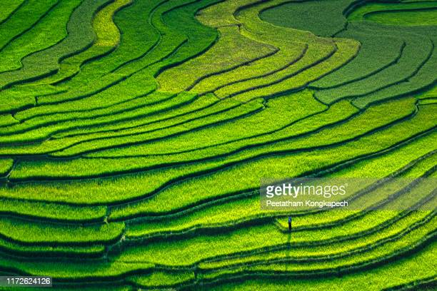 bird eye view of mu cang chai in the afternoon - terraced field stock pictures, royalty-free photos & images