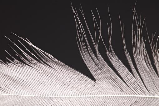 Bird Feather Close Up - gettyimageskorea