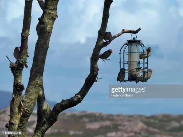 bird feeder on isle of iona, hebrides archipelago, scotland - hebriden inselgruppe stock-fotos und bilder