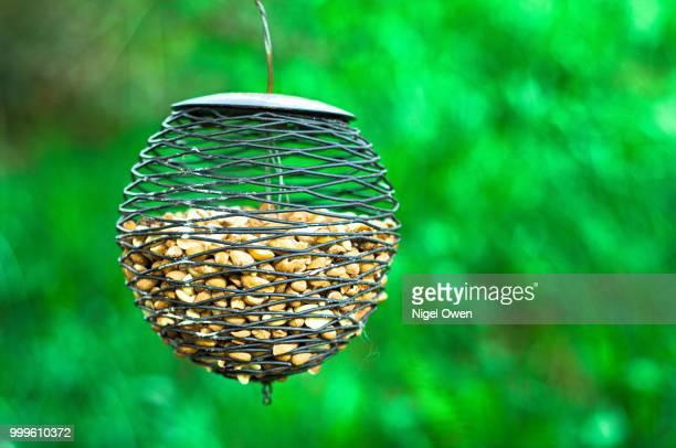 bird feeder - nigel owen stock pictures, royalty-free photos & images
