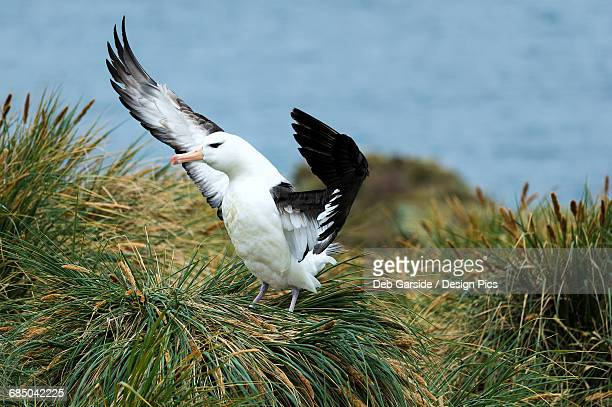 Bird flapping its wings on the grass