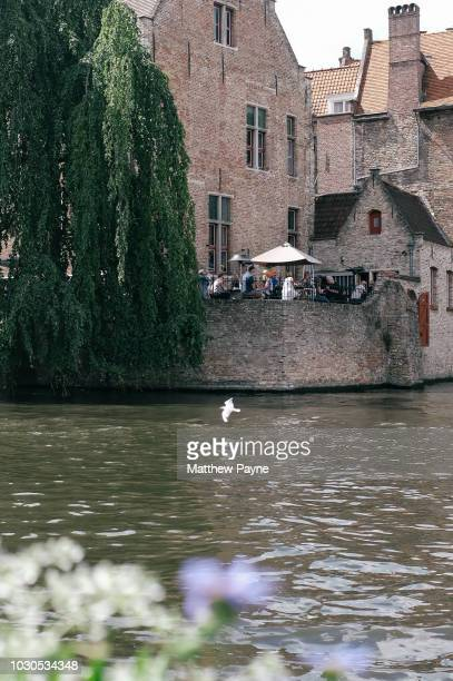 a bird flies along the canals on bruges, belgium - 西フランダース ストックフォトと画像