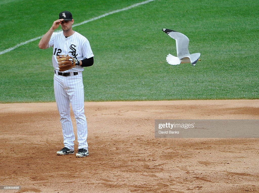 A bird flies by Conor Gillaspie #12 of the Chicago White Sox during the third inning in a game against the San Francisco Giants at U.S. Cellular Field on June 18, 2014 in Chicago, Illinois.