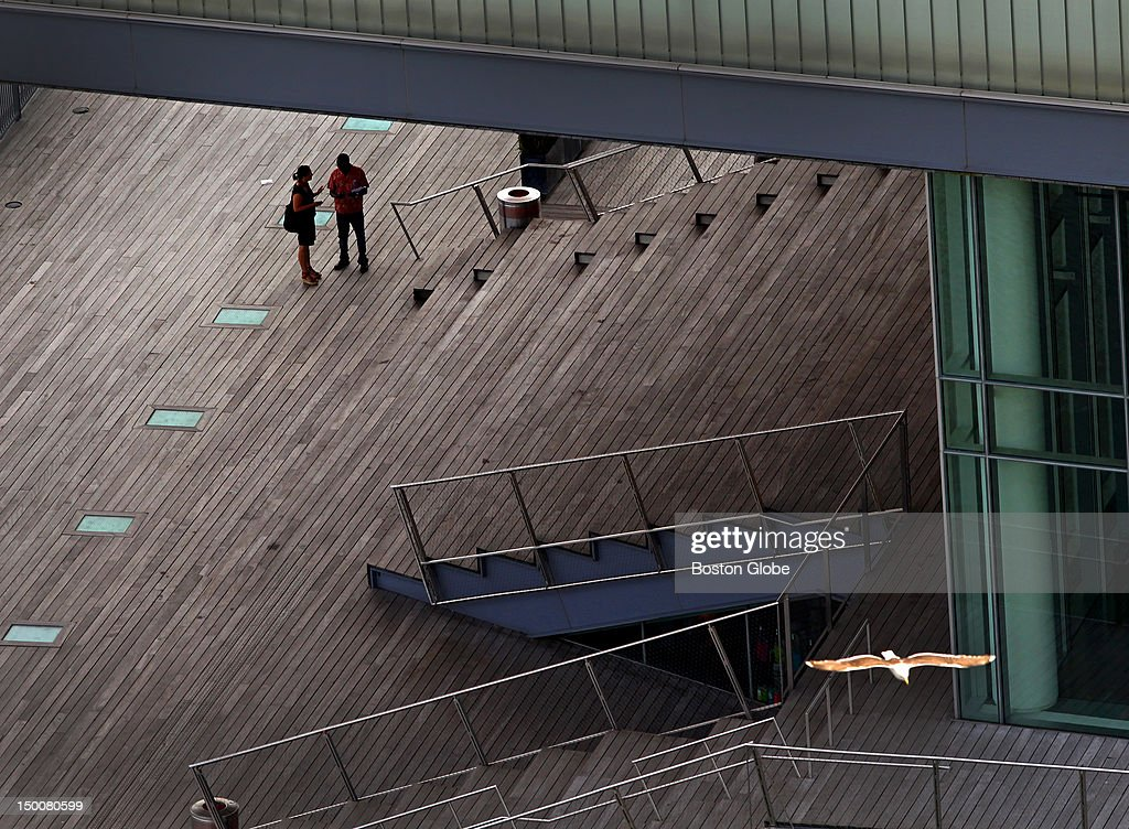 Bird Flies Over ICA Boardwalk : News Photo