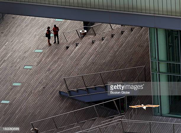 A bird flies over the Boston Harbor side of the boarded deck of the Institute of Contemporary Art/Boston
