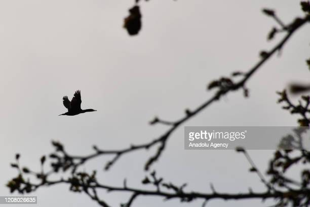A bird flies over the sky of Adala Canyon which is believed formed after a volcanic eruption thousands years ago in the district of Salihli in...