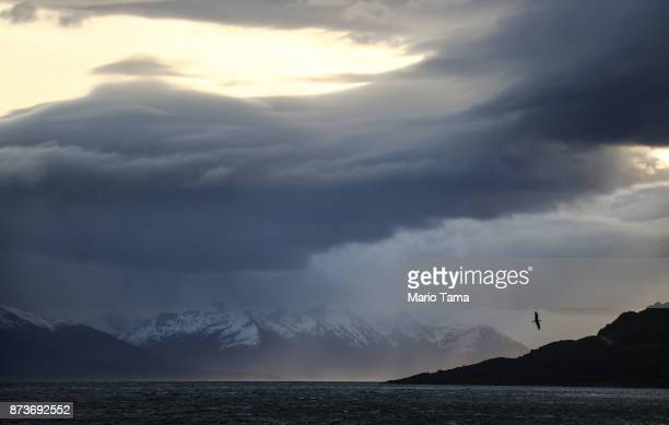 A bird flies with Chilean mountains in the distance on October 31 2017 in Ushuaia Argentina Ushuaia is situated along the southern edge of Tierra del...