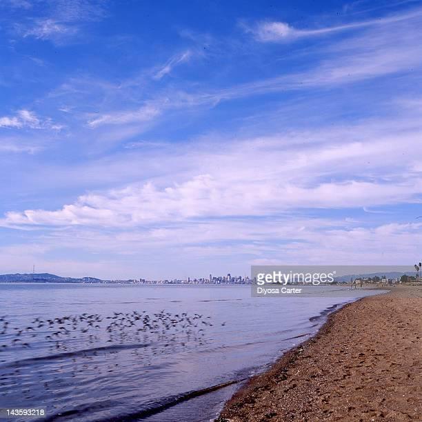 Bird flock over pacific ocean beach