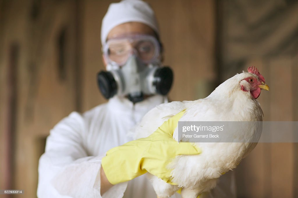 Bird Flu : Stock Photo
