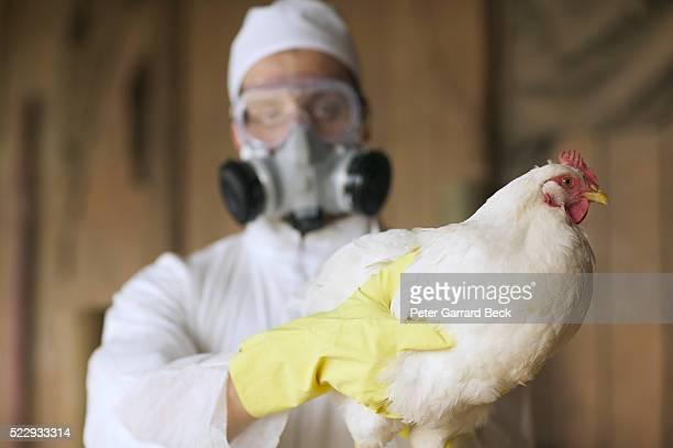 bird flu - 鳥インフルエンザウィルス ストックフォトと画像