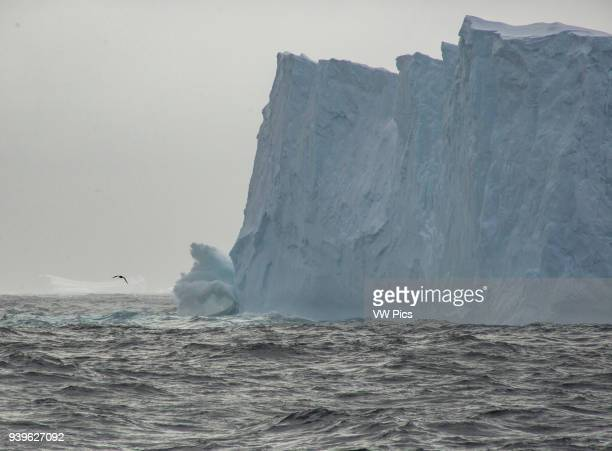 A bird fly over a wandering Iceberg on Bellingshausen sea