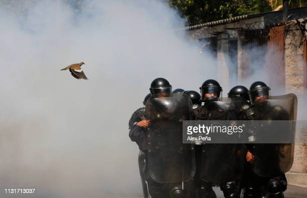 A bird flyes near riot police during a protest against the intention of the National Congress to put the water service in hands of the private sector...