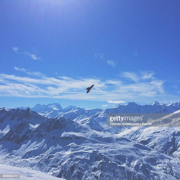 Bird Flying Above Snow Covered Mountains