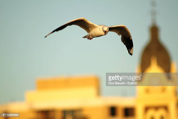 bird flying against built structure - barulho stock pictures, royalty-free photos & images